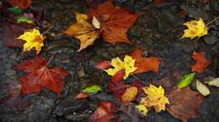 Fall Leaves and Trickling Water Loop - stock footage