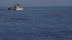 Wild Dolphins Stock Footage