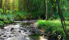 Virgin forest with river Stock Photos