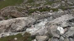 Herd of Brown Swiss cows grazing on an Alpine meadow near a cascading stream. - stock footage
