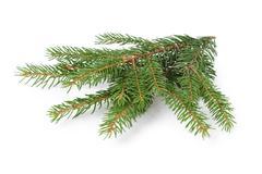 gree spruce twig - stock photo