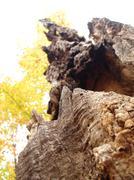 Rotten tree 2 - stock photo