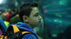 Young boy watching shark in aquarium HD - stock footage
