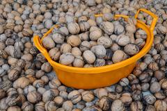 Wallnuts and orange plastic basin Stock Photos