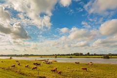 Farmland alongside the dutch river ijssel Stock Photos