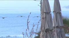 Pelicans at Del Mar Beach Stock Footage