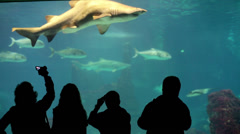 People watching fish in Barcelona Aquarium HD Stock Footage