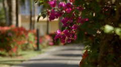 Path and Flowers Stock Footage