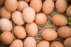 Eggs on straw Stock Photos