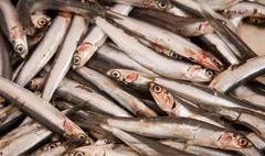 blue fish (anchovies) - stock photo