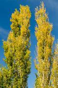 Stock Photo of Autumn Tree Colors