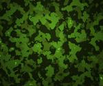 Stock Illustration of green camouflage texture army background
