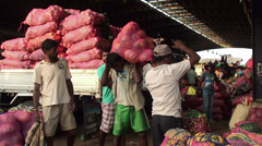 Loading bags of vegetables in the wholesale vegetable market. Stock Footage