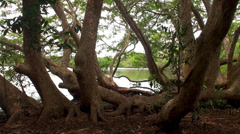 Lake at wild jungle. Wilpattu NP, Sri Lanka. Stock Footage