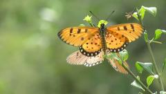 Beautiful Butterflies  on nice green natural bokeh background Stock Footage