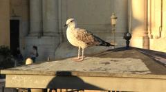 Bird watching tourists Stock Footage