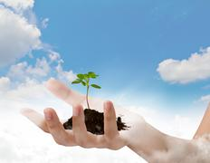 business hand holding green small plant over blue sky with cloud - stock photo