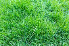Stock Photo of close-up image of fresh spring green grass
