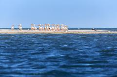 Pink pelicans Stock Photos