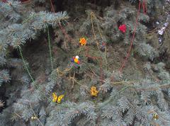 Fancy a festive fir Stock Photos