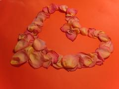 declaration of love in the petals of roses - stock photo