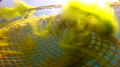 Yellow algae and fishnet Stock Footage