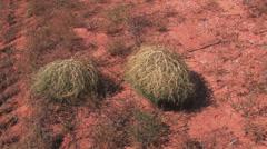 Tumble weed 1 Stock Footage
