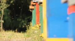 The bees in the apiary Stock Footage