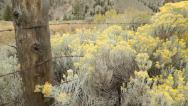 Stock Video Footage of Flowering Sagebrush and Ranch Fence
