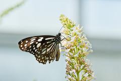 A butterfly stay on the flower - stock photo