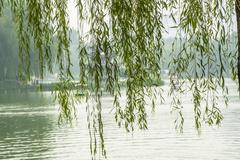 scene of a park in beijing and the drooping willow like curtains - stock photo