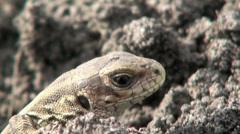 Sad lizard Stock Footage