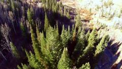 Aerial view fly over of pine trees in the Uinta National Park Stock Footage
