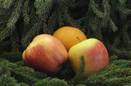 Stock Photo of Two apples and one orange in firtree