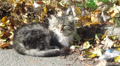 street cat is basked in sun HD Footage