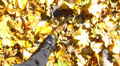 Human feet  walking  in autumn yellow leaves HD Footage