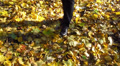 Human feet and autumn yellow leaves Footage