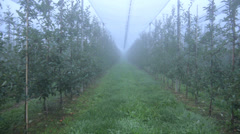 Aerial view: Orchard with netting - stock footage