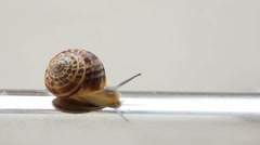 Snail moving on metal tube Stock Footage