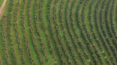High angle view of the orchard - stock footage