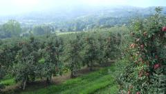 Low aerial view of the apple orchard - stock footage