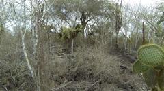 P03022 Cactus and Shrubs at Galapagos Islands Stock Footage