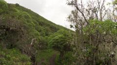 P03093 Galapagos Island Habitat Stock Footage