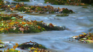Stock Video Footage of Colorful leafs next to a stream during autumn - Time lapse