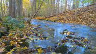 Stock Video Footage of Autumn colored forest with a small stream