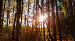 beautiful autumn forest with sun shining - dolly shot - stock footage