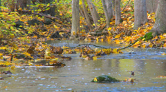 Trees dropping there colorful leafs during autumn next to a river Stock Footage