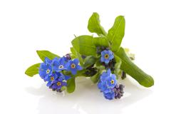 Blue forget-me-not Stock Photos