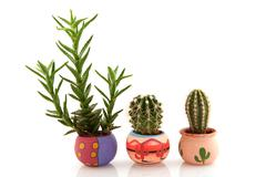 Prickly cactuses and succulent Stock Photos
