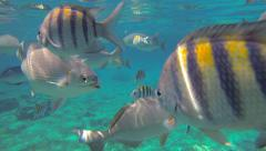 Saltwater Fish - stock footage